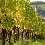 Domaine Sipp Mack vingården